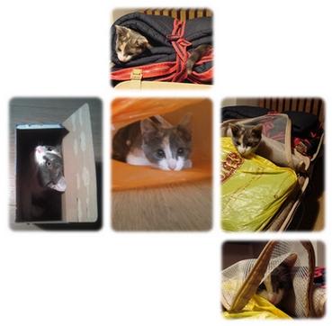 http://madeofspleen.cowblog.fr/images/Repertoire1/Ayanahideandseek-copie-1.jpg